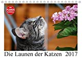 Die Launen der Katzen 2017 (Tischkalender 2017 DIN A5 quer): Die schönsten Momente aus dem Leben der Hauskatzen. (Geburtstagskalender, 14 Seiten ) (CALVENDO Tiere)
