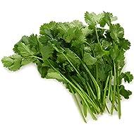Langmead Herbs Fresh Cut Coriander 28g