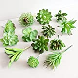 St.Mandyur 5Pcs Different Succulents Artificial Cactus Plants for Office Home Garden Decor ( Colour Randomly)