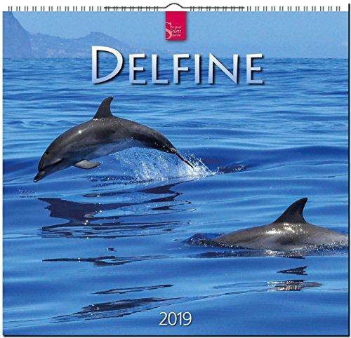 MF-Kalender DELFINE 2019