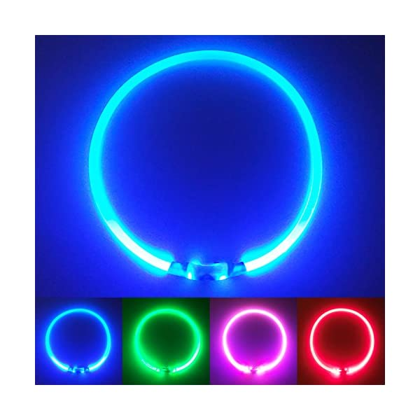 PetSol Ultra Bright USB Rechargeable LED Dog Safety Collar 1