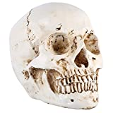 1Pz 1: 1 Formato di Dimensione della Vita Modello di Anatomia Umana Cranio In Resina Anatomia Muscolo Medico Artista Decorazione di Casa Medico Decorazione di Halloween