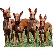 Pegatina coche Perro de caza Grupo de Podencos 20 x 16 cm | Adhesivo de Fácil