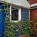 Rankgitter-Set zum selber bauen - 100 Bambusstäbe 180 cm lang + 100 Klammern von Native Plants bei Du und dein Garten