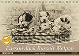Parson Jack Russel Welpen (Tischkalender 2020 DIN A5 quer): Ein lustiger Haufen Parson Jack Russell Welpen begleitet Sie durchs Jahr. (Monatskalender, 14 Seiten ) (CALVENDO Tiere) -