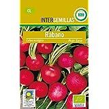 Semillas ecológicas de Rábano Rojo Saxa