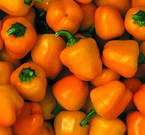 Premier Seeds Direct Pepper Sweet Mini Bell Yellow includes 100 Seeds