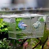 Carreguard Ablaichkasten aus Plexiglas Fischzucht Isolation Box 12 x 7 x 7 cm