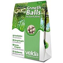 Estanque Planta Crecimiento bolas