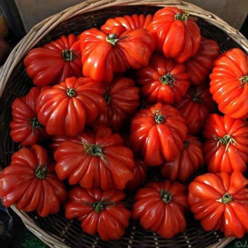 Sisaki Graines de tomates mini bonsaï pérennes Bonsaï graines de plantes d'intérieur Fruits et arbres fruitiers