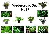 Tropica Vordergrund Set mit 6 Topf Pflanzen...