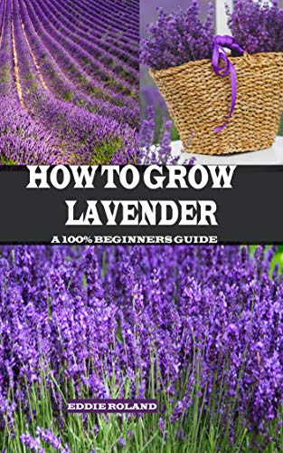 How to Grow Lavender: A 100% Beginners Guide (English Edition)