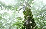 Das geheime Leben der Bäume: Was sie fühlen, wie sie kommunizieren – die Entdeckung einer verborgenen Welt - 5