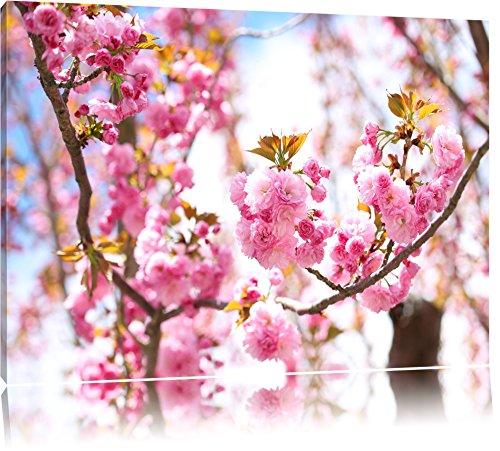Pracht Gerahmt (Schöne Kirschblüten Format: 100x70 auf Leinwand, XXL riesige Bilder fertig gerahmt mit Keilrahmen, Kunstdruck auf Wandbild mit Rahmen, günstiger als Gemälde oder Ölbild, kein Poster oder Plakat)