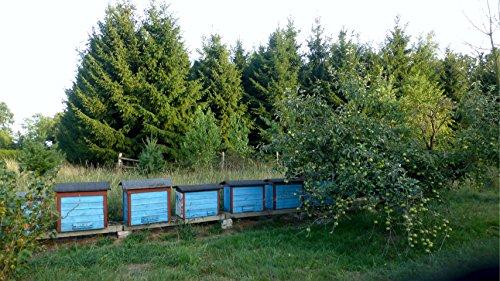 Miel-de-Flores-con-Polaco-Sin-pasteurizar-miel-cruda-13-kg-Miel-polaco-directamente-del-apicultor