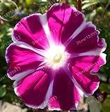 graines 100pcs / lavande, les graines de vanille, les plus délicieux jardins potagers plantes les bonsaï, couleurs mélangées (rose, bleu, violet)