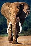 Startonight Glasbild Elefant, Bild auf Acrylglas Muster Modern Dekoration Fertig zum Aufhängen 60 x 60 cm
