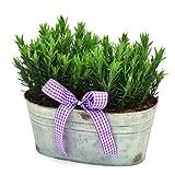 FRAGRANT LAVENDER TROUGH ARRANGEMENT- A Wonderful Plant Gift - Best Reviews Guide