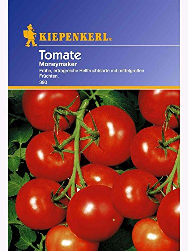 Tomaten Moneymaker