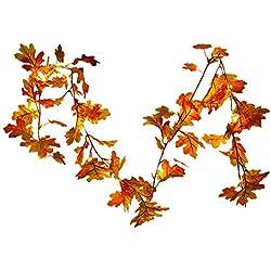 Shopping - Ratgeber 51I75V0b69L._AC_UL250_SR250,250_ Geniessen Sie die farbenfrohe Jahreszeit mit Herbst-Deko