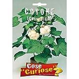 COTONE (Gossypium) (SEMI DA FIORE)