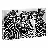 Zebras | Trendiger Kunstdruck auf Leinwand | XXL Format | Verschiedene Farben und Größen (120 cm x 80 cm, Schwarz-Weiß)
