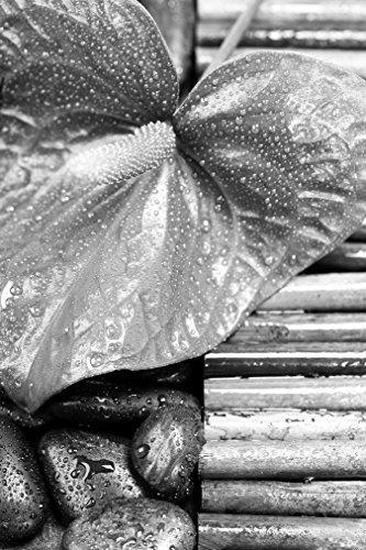 Bilderdepot24 Vlies Fototapete - Calla und Kiesel - schwarz Weiss - 200x300 cm - mit Kleister - Poster - Foto auf Tapete - Wandbild - Wandtapete - Vliestapete