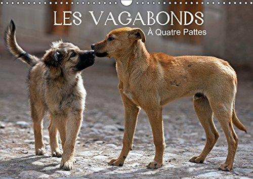 LES VAGABONDS A Quatre Pattes. 2019: Des photos inhabituelles de nos compagnons a quatre pattes.