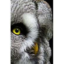 """Owl Notebook: 150 lined pages, softcover, 6"""" x 9"""""""