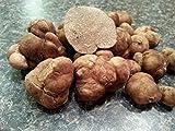 Samen Paket: 10 G Frie Pecan Trüffel Tuber Tartufi Myzel myzel Seeds Spores