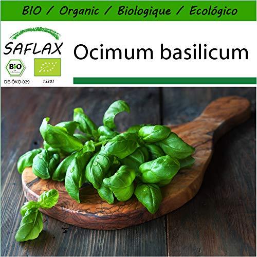 SAFLAX - BIO - Basilikum Sweet Genovese - 800 Samen - Mit keimfreiem Anzuchtsubstrat - Ocimum basilicum (Genovese Basilikum Samen)