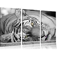 tigre bianco nero 3 pezzi image / tela 120x80 poggiante su tela, enorme XXL Immagini completamente incorniciata con barella, incorniciatura sulla foto parete con cornice, gänstiger come un quadro o un dipinto a olio, non un manifesto o un banner