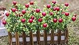 2018 Dekorative Blumen Künstliche Seide Mini Blumen und Pflanzen für Indoor Dekoration (Sehr Viel Farbe) in Einem Topf Fake Hanging Vine Pflanze Blätter Girlande Haus Garten Wand vergossen 30cm, o