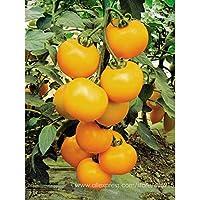 Go Garden Bellfarm Bonsai Heirloom Orgánico Amarillo Braguero Tomate Frutas de tamaño mediano Sabroso Juicy Dulce Alta Germinación -20Pcs / Pack