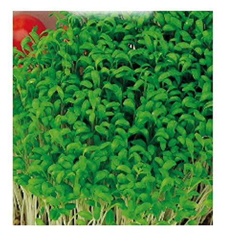 1800 c.ca semi crescione comune o agretto - lepidium sativum - in confezione originale - prodotto in italia - aromi - sedan