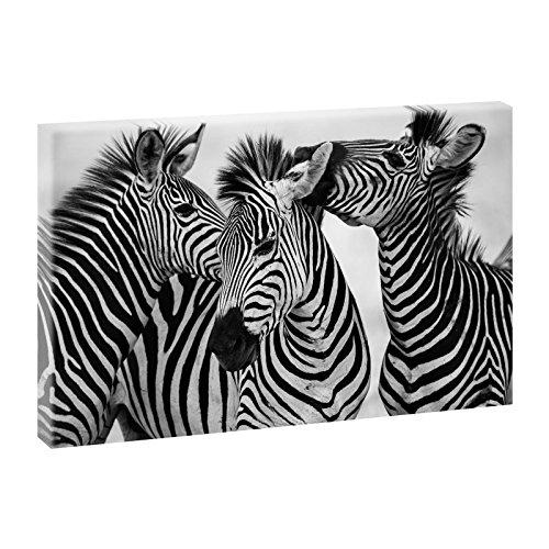 Zebras | Trendiger Kunstdruck auf Leinwand | XXL Format | Verschiedene Farben und Größen (100 cm x 65 cm, Schwarz-Weiß)