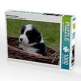 Border Collie Welpe 1000 Teile Puzzle quer (CALVENDO Tiere)