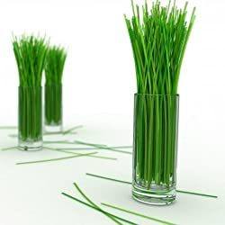 Flora Fields Herb Seeds: Lemongrass