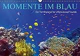 Momente im Blau - Ein Terminplaner für Unterwasser-Freunde (Wandkalender 2019 DIN A3 quer): Das Leben im Meer entdecken (Geburtstagskalender, 14 Seiten ) (CALVENDO Tiere)
