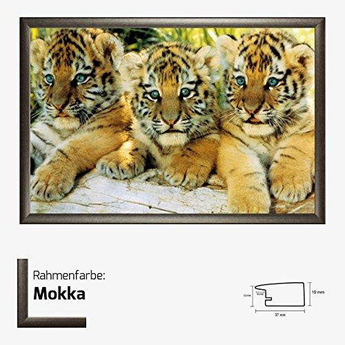 Kunstdruck Poster - Little Tiger Babys Cups kleine Tiger Tigerchen 61 x 91,50 cm mit MDF-Bilderrahmen Pisa & Acrylglas reflexfrei, viele Farben zur Auswahl, hier Mokka (Print Mokka-tiger)