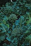 justseed–orgánico–verduras–Calabrese verde semillas germinadas–500semillas