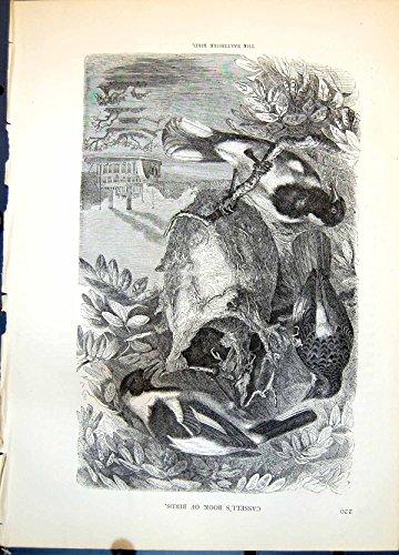 Stampi Il Vapore Ciondolante C1874 302G363 dell'Albero del Nido Tessuto Gruppo dell'Uccello di Baltimora - Baltimora Uccello