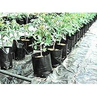 VINAYAKAMART GROW PLANT NURSERY BAGS SIZE(4X5) INCH PACK OF 300 (BLACK)
