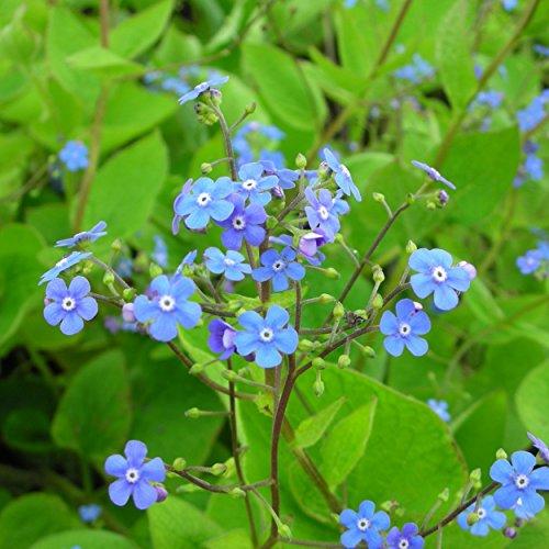 OBI Schnittpflanze