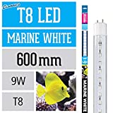Arcadia LED Tube Marine White 9 Watt FEW18 Aquarium (Länge wie 18 Watt Leuchtstofflampe)