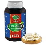 Astragalus Wurzel 180 Kapseln (Astragalus membranaceus, Tragant) je 450mg rein natürliches Pulver, ohne Zusatzstoffe