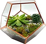 Cultivea Terrarium aus Glas mit Öffnung für Fassade – Dekoration und Modernes Design – Größe 17 cm x 17 cm x 15 cm – Formes Octogonales – Finish der Kanten Kupfer und Hochwertig