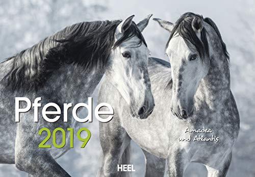 Pferde 2019: Der Sympathische Pferde-Kalender mit den charmanten Namen