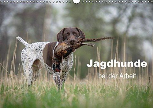 Jagdhunde bei der Arbeit (Wandkalender 2019 DIN A3 quer): Unentbehrliche Gehilfen, Freunde und Gefährten des Jägers (Monatskalender, 14 Seiten ) (CALVENDO Tiere) (Jagd Jagdhunde)