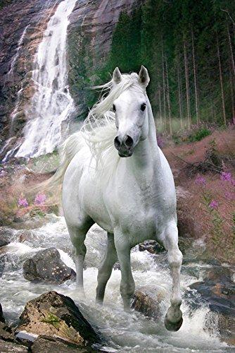 GB eye Ltd Pferde Poster Schimmel, unbeschichtet, Mehrfarbig 2